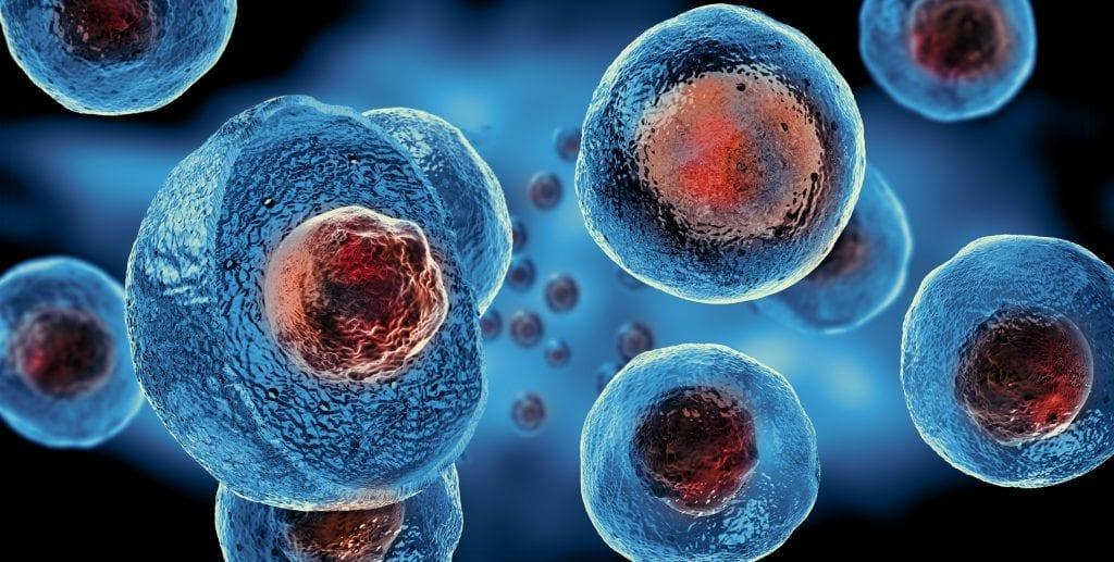 Stammzellen Ansicht